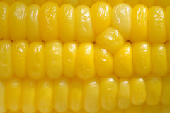 Close up of Ear of corn Royalty Free Stock Images