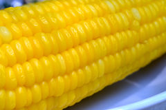 Close up of Ear of corn Stock Images