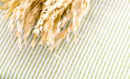 Close up Ear of rice on table with green strip tablecloth Royalty Free Stock Photos