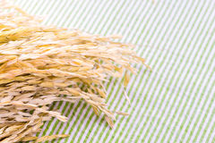 Close up Ear of rice on table with green strip tablecloth Royalty Free Stock Image