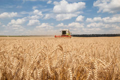 Close-up ears of wheat at field and harvesting machine on background Royalty Free Stock Photography