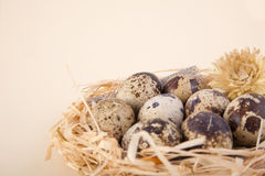 Close up of  easter eggs in a nest. On beige background Stock Photography