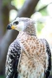 Close-up een adelaars sterke klauwen de jacht Royalty-vrije Stock Foto's