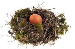 A chicken egg in a bird`s nest royalty free stock photos