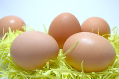 Close up The Egg on isolate white background Royalty Free Stock Photos