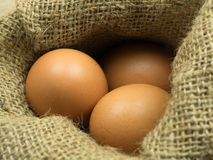 Close up egg in sack. Tree eggs in a sack Stock Photos
