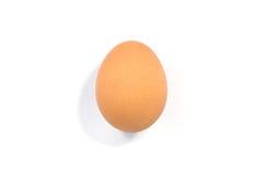 Close up of egg Stock Photos