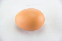 Close up of egg on white background. Stock Photo