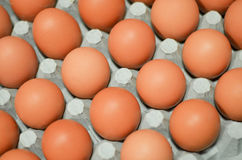Close up of eggs in cardboard container Stock Image