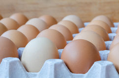 Close-up of eggs in a cardboard tray. Chicken eggs packed together in a cardboard tray Royalty Free Stock Photography