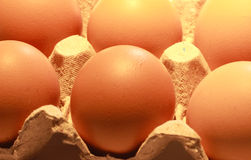 Close up of eggs in a carton package. Close up of eggs for sale in carton package Royalty Free Stock Image
