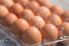Close up of eggs in clear box. Close up of eggs in a basket. Brown eggs. Chicken Egg royalty free stock images