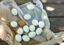 Close up of eggs in sieve, top view of eggs on gauze. Chicken Egg. Hen eggs basket Stock Photos