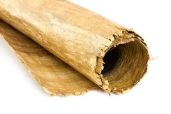 Close up of Egyptian paper reed Stock Photos