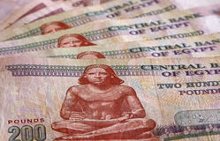 Close up of Egyptian pounds Stock Image
