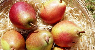 Close up of eight pears stock video footage