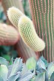 Close up element of large cactus, vertical composition Royalty Free Stock Images