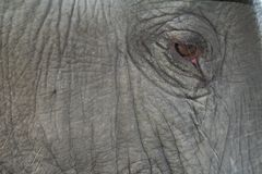 Close-up of an Elephant eye Stock Photo