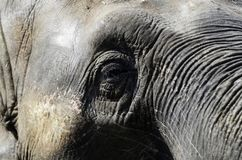 Elephant in the zoo. Close up of Elephant eye on sunny day royalty free stock image