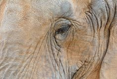 Close-up of elephant eye Stock Image