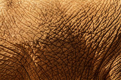 Close up of elephant hide. An abstract royalty free stock images