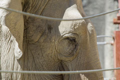 Close up of elephant. Stock Image