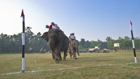 Close-up of elephant polo in Nepal Stock Photo