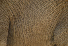 Close-up of an elephant's body Royalty Free Stock Photo