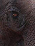 Close up of Elephant's eye Royalty Free Stock Image