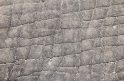 Elephant Skin Close-up - Texture and Background Stock Images
