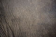 Close up elephant skin texture and background Royalty Free Stock Images