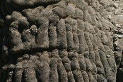 Close up of Elephant Skin Stock Image