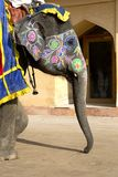 Close-up of elephant vividly painted in Amber Fort, Jaipur, India Royalty Free Stock Photos