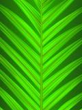 Close up em folha de palmeira ilustração do vetor