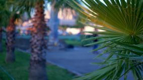 Close-up em folha de palmeira no fundo da cidade moderna Bokeh no fundo vídeos de arquivo