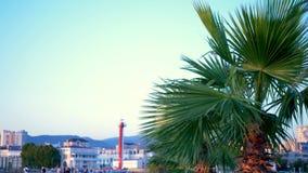 Close-up em folha de palmeira no fundo da cidade moderna Bokeh no fundo filme