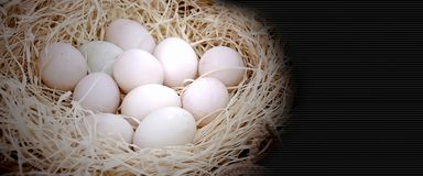 Close up em muitos ovos orgânicos do frescor Imagens de Stock
