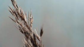 Close-up em Reed video estoque