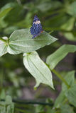 Close-up em uma borboleta. fotografia de stock royalty free
