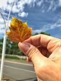 Close up em uma mão que guarda uma folha de bordo Foto de Stock Royalty Free