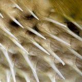 Close-up em uma pele dos peixes foto de stock royalty free