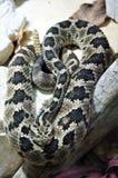 Close-up em uma serpente fotografia de stock