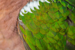 Close up Emerald dove feathers Royalty Free Stock Photos