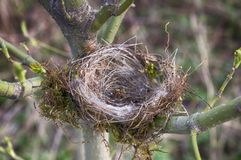Empty birds nest. Close up empty birds nest in the tree Royalty Free Stock Photo