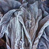 Close-up en detail op een stapel van berijpte dode bladeren in een boskreupelhout in de winter stock foto's