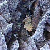 Close-up en detail op een stapel van berijpte dode bladeren in een boskreupelhout in de winter royalty-vrije stock afbeeldingen