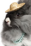 Close-up of English Angora rabbit wearing pearls. And straw hat in front of white background stock images