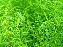 Close-up, Environment, Grass Stock Photography