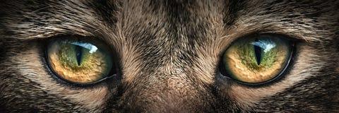 Close-up escuro do gato do focinho Front View Imagens de Stock Royalty Free