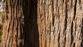 Close up of tree trunk and its textured bark stock image